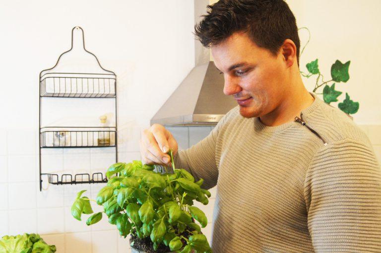 gesunde Ernährung Ernährungsberater Aachen hält Basilikum Pflanze